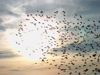 birdsof theAir.jpg